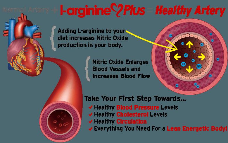 L-arginine Benefits, Learn More about L-arginine