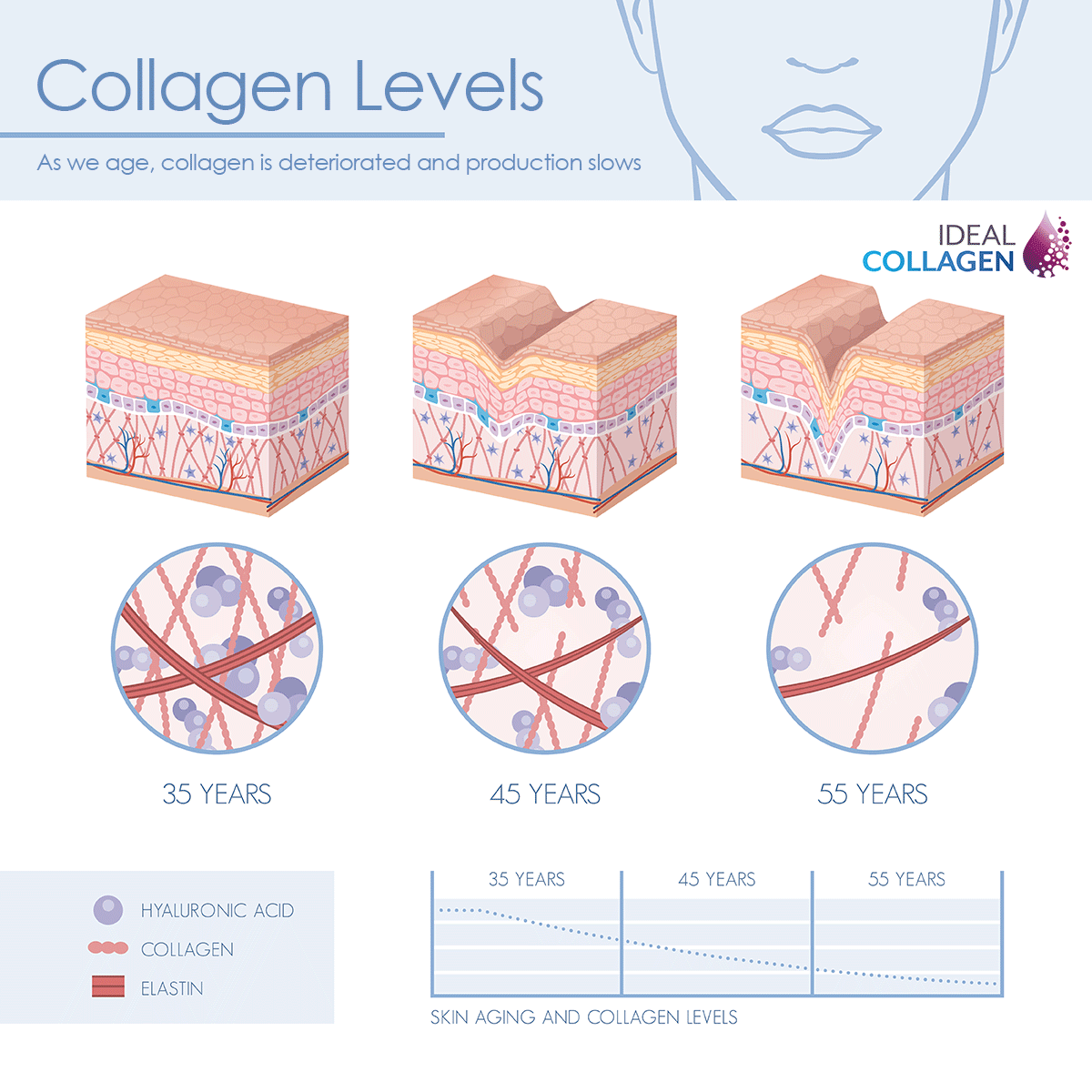 Collagen Depletion During Aging