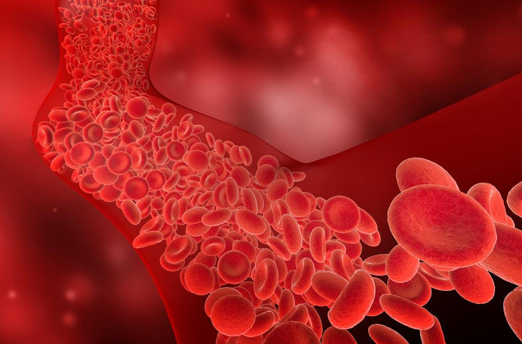flow of red blood cells into the blood vessel, 3D illustration