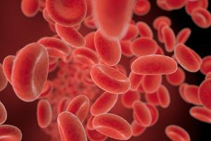 red blood cells flowing in a vessel, 3D illustration